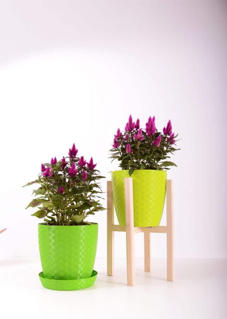פרחים מפלסטיק